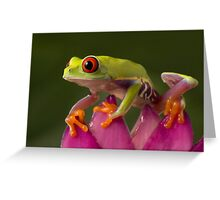 The young adventurer Greeting Card
