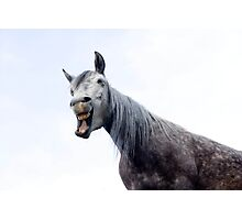 Laughing horse Photographic Print