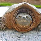 Snappy Turtle by Jonathan Green by Jonathan  Green