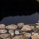 Hot Springs Rocks by teresalynwillis