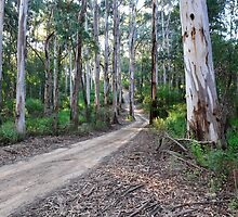 Tall Timber - Victorian High Country by Alwyn Simple