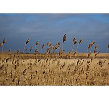 Grass hit by the Wind Photographic Print
