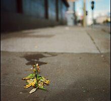 Fleurs fanées by Patrick T. Power