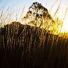 Sunset Reflection by Ruben D. Mascaro