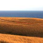 Bells Beach Hills Dusk by Erik Holt