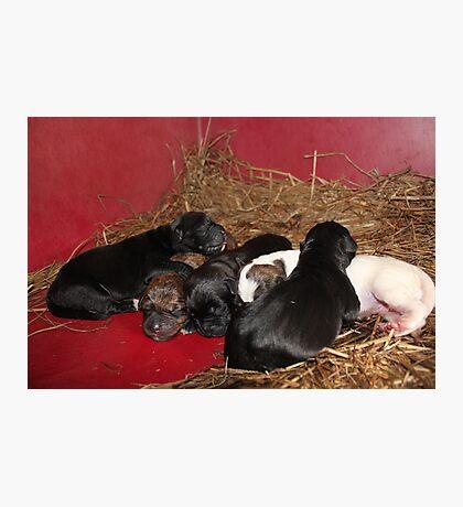 Newborns Photographic Print