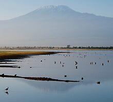Kilimanjaro from Amboseli by sloweater