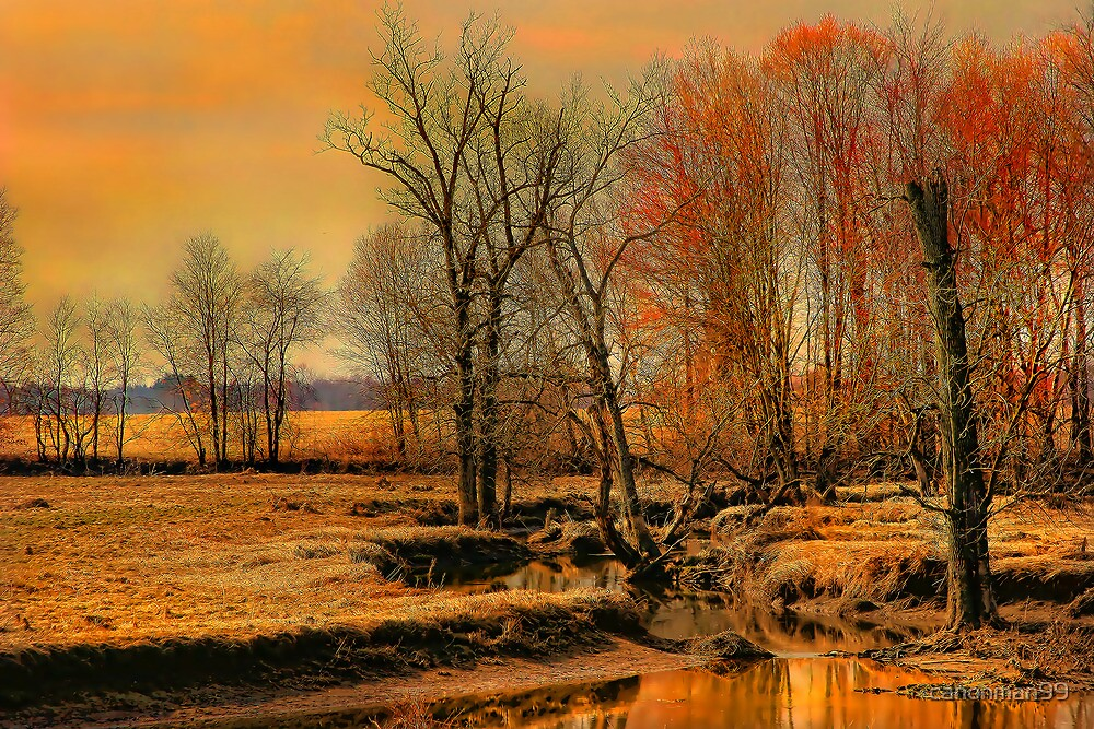 """"""" A Golden Moment....Lasts """" by canonman99"""