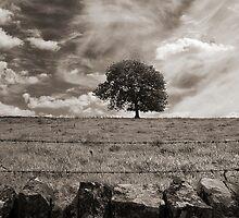 The lonely tree, Derbyshire landscape by Magdalena Warmuz-Dent