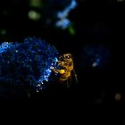 Bee on Cyanotis by DMontalbano
