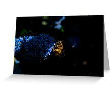 Bee on Cyanotis Greeting Card