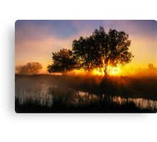 Buttercup Sunrise Canvas Print