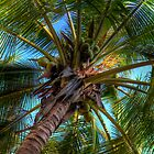 Coconut Tree by Gary Bergeron