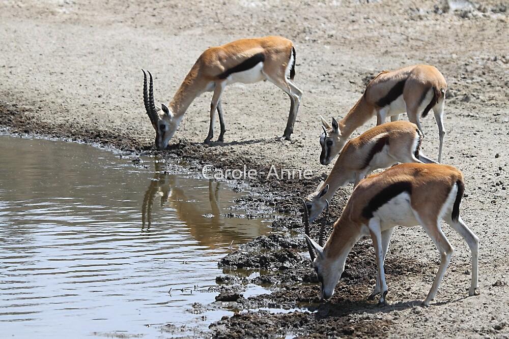 Thomson's Gazelles, Serengeti, Tanzania by Carole-Anne