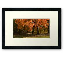 Entrance to the Forest Framed Print
