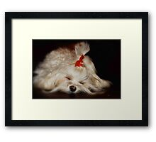 While Sugar Plums Danced Framed Print