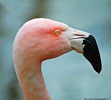 Let's Do The Flamingo by Nick Boren