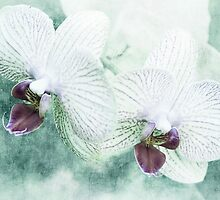 Blue Orchids by KBritt