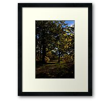 Highlights Framed Print
