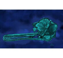 Ganges River Dolphin Skull Photographic Print
