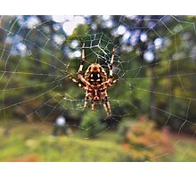 Barn Spider Photographic Print