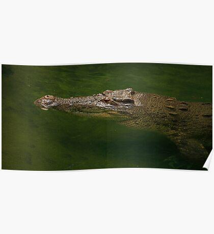 Australian Crocodile Poster