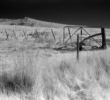 Grass, fences, sky by Syd Winer