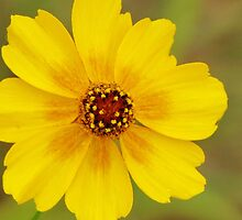Yellow Sensation by lorilee