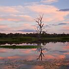 Wonga Wetlands Sunset by Cameron B
