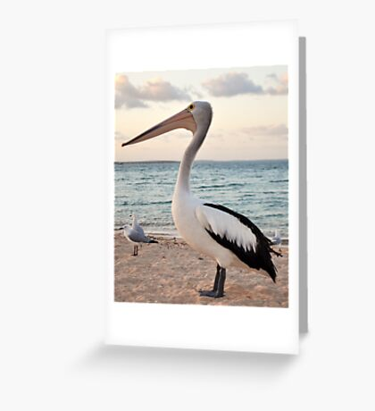 Pelican, Monkey Mia Beach Greeting Card