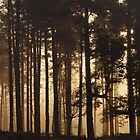 Woodland Sunrise Panorama by Ann Garrett