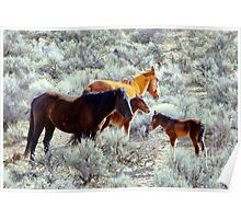 Two Wild Foal With Mom's Poster