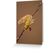Alnus Glutinosa Greeting Card