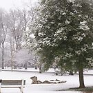 Snow in the Park by pixhunter