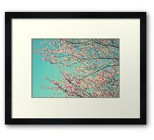 pretty pink blossoms Framed Print
