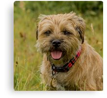 Border Terrier Red Grizzle Dog Canvas Print