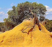 Tree Mound by Keri Buckland