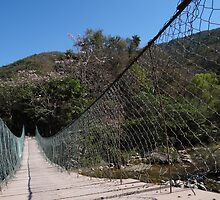 Jungle Bridge - Puente En La Selva by Bernhard Matejka