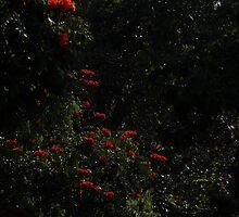 Like Red Candlelight - Como Luz De Candela Roja by Bernhard Matejka