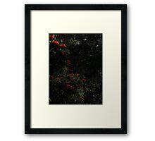 Like Red Candlelight - Como Luz De Candela Roja Framed Print