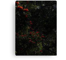 Like Red Candlelight - Como Luz De Candela Roja Canvas Print