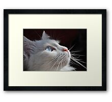 Cat with blue eyes Framed Print