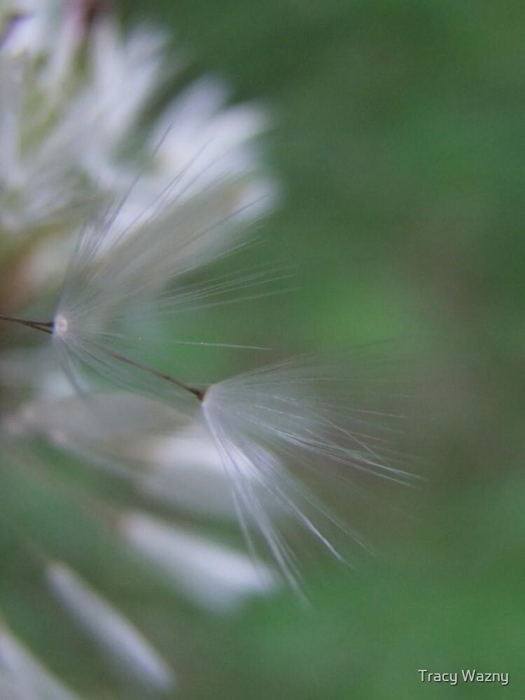 Wisp's On The Wind by Tracy Wazny