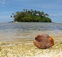coconut by Anne Scantlebury