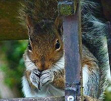 Bright Eyed And Bushy Tailed by lynn carter