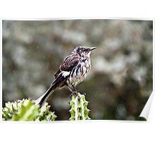 Wet Bird Poster