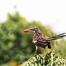 Wet Bird and Berry by martinilogic