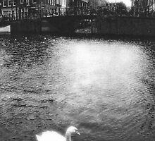 Swan on Amsterdam canal by Roland Dean Mueller
