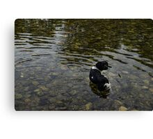 Crystal Clear Water Play - Cute Puppy In The River Canvas Print