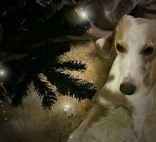 Christmas Whippet by Shirin Hodgson-Watt